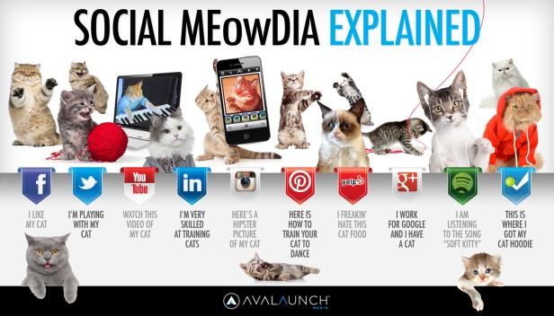 social-media-sites-explained-cats.jpg